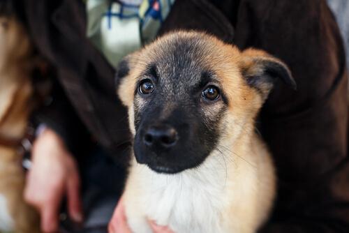 Havai Fişeklerden Korkan Köpekler İçin Alınabilecek Önlemler