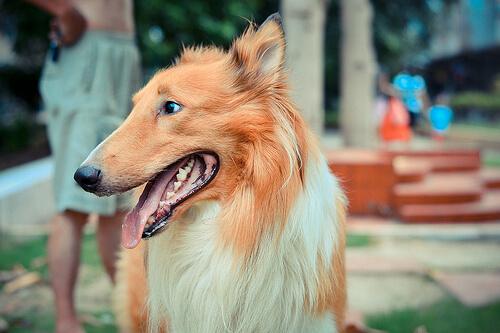 Görünümüne Bakarak Bir Köpeğin Yaşını Nasıl Hesaplarsınız