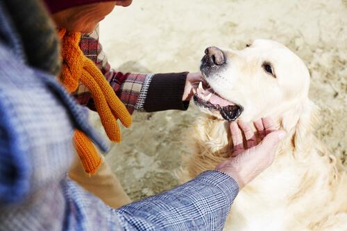 köpeğini seven kadın
