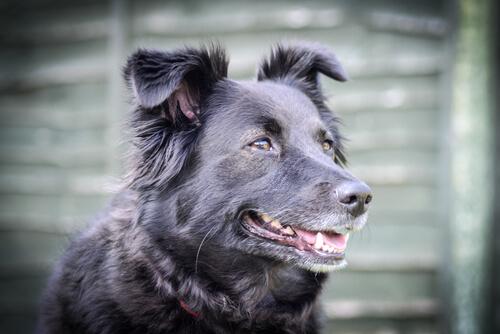 Huysuz Bir Köpeği Sakinleştirmenin Yolları