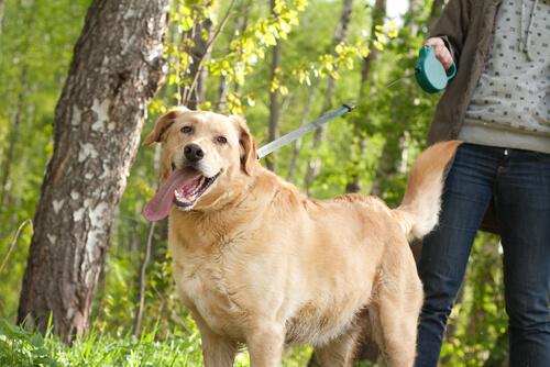 tasmasıyla gezdirilen köpek