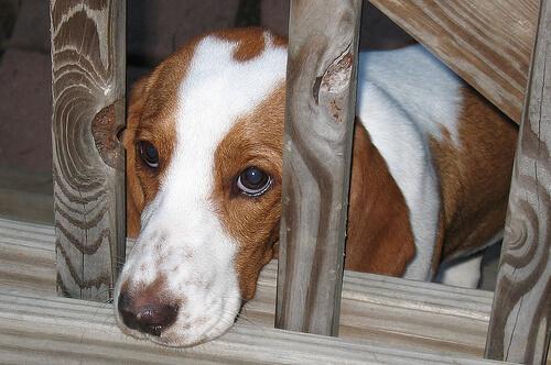 Bir Köpeğin Korktuğunu Gösteren 6 İşaret ve Empati Kurma Yolları