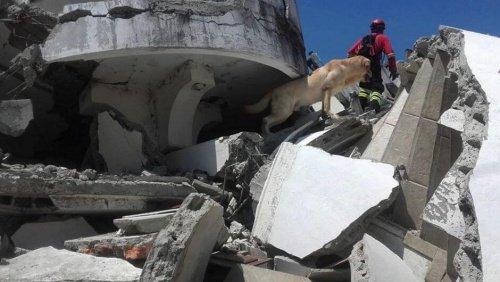 """Ekvador""""daki Arama ve Kurtarma Köpekleri: Ve İnanılmaz Başarıları"""