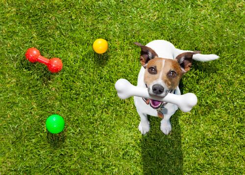 köpek ve oyuncakları