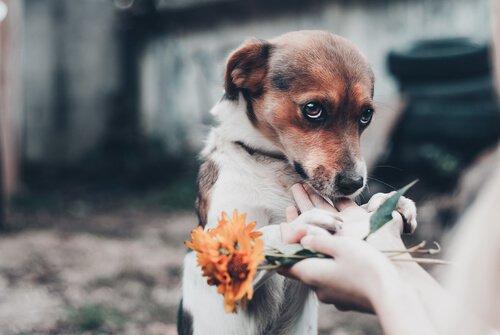 köpek ve çiçek
