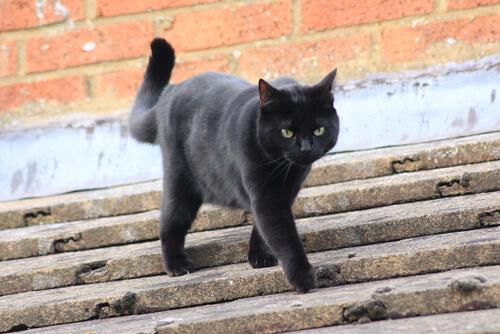 Kedinize Asla Yapmamanız Gereken 5 Şey