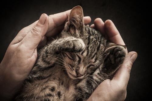 avuç içinde kedi