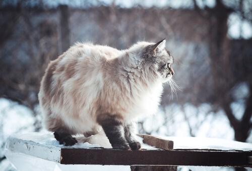 karlı havada kedi