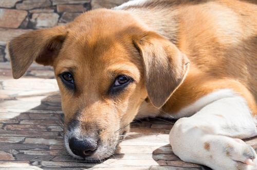 yerde yatan sokak köpeği