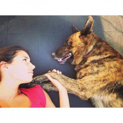 köpeklerde aşırı duyarlılık hastalığı