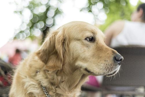 Büyük Köpek Beslemek İçin 5 Neden