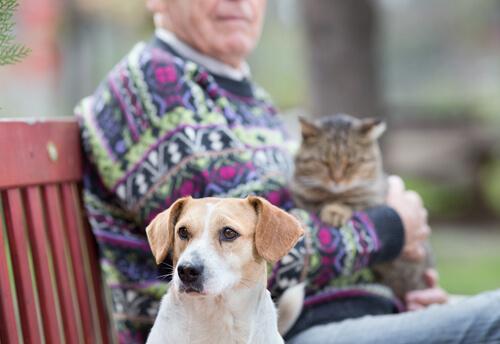 parkta köpek ve kedi