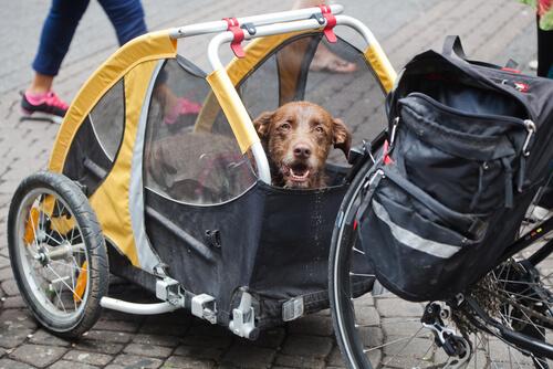 Peru'yu Bisikletle Gezen Köpek