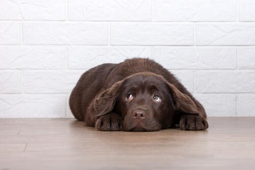 Köpeğinizi Cezalandırmamanızı Gerektiren 6 Sebep