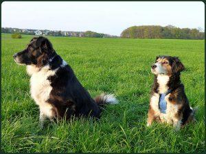 çimenlerde oturan iki köpek