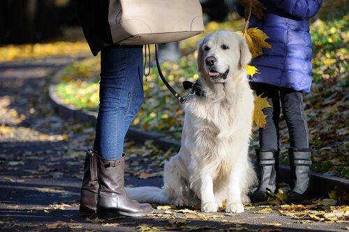 sonbaharda gezdirilen köpek