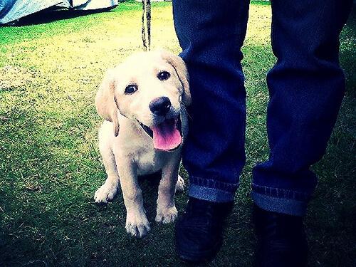 Köpeğiniz Neden Her Yerde Sizi Takip Eder