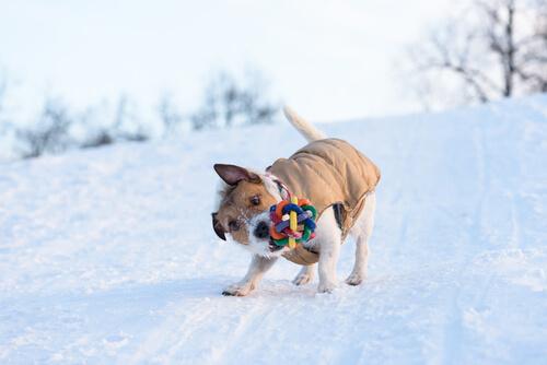 Köpekler Oyuncakları Neden Sallar?