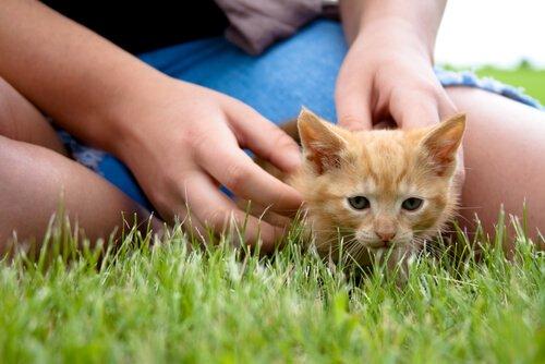 çimlerde kediyle oynamak