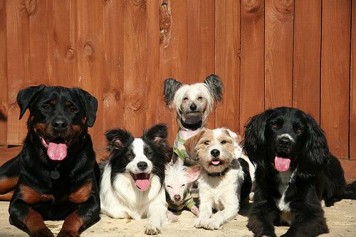 köpekler kameraya bakıyor