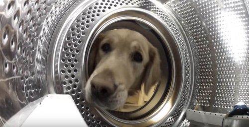 Arkadaşını Çamaşır Makinesinden Kurtaran Köpek