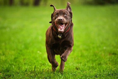 Hiperaktif Bir Köpeği Kontrol Altına Almanın Beş Yolu