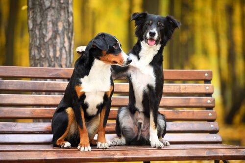 İki Köpeğin Birbiriyle Anlaşmasını Nasıl Sağlarız?