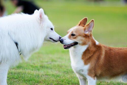 birbiriyle anlaşan iki köpek