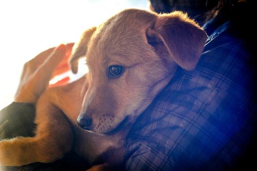 sarılan yavru köpek