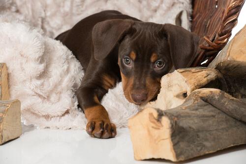 Başka Bir Hayvanın Kaybını Köpeğinize Nasıl Hissettirmezsiniz