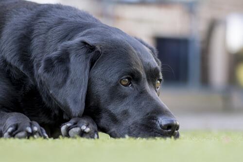 Yaşlı Köpeklerde Görülen Yaygın Hastalıklar