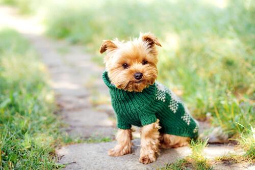 İsim Oyunu: Küçük Köpekler İçin Harika İsimler