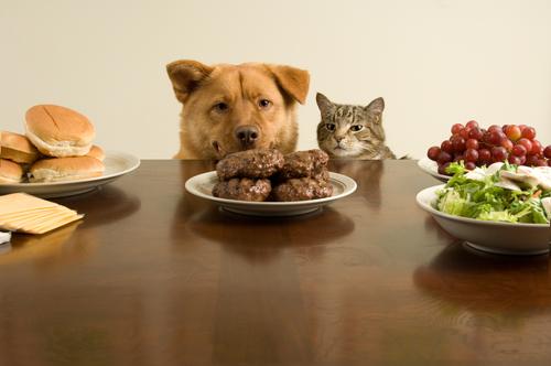 yemeğe bakan hayvanlar