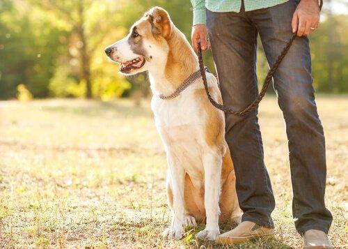 Köpek Tüylerini Kıyafetlerden Temizlemek için 5 İpucu