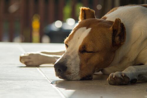 yerde uyuyan köpek