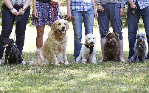 köpekler ve sahipleri
