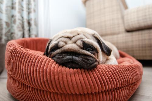 köpeklerde uyku