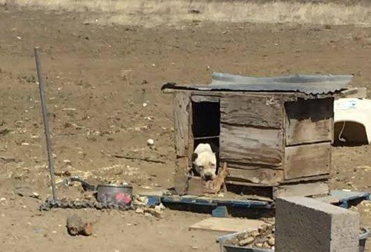 kulübesinde mahsur kalan köpek