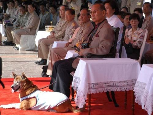 Köpekleri Sahiplenen Tayland Kralı ile Tanışın