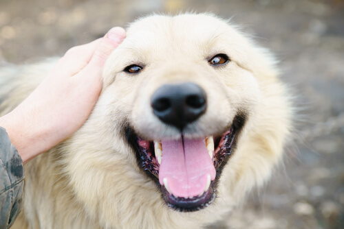 Köpeğimi Sevmem İçin 10 Sebep