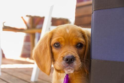Köpeklere Saygı Duyuyorsanız Yapmamanız Gereken 10 Şey