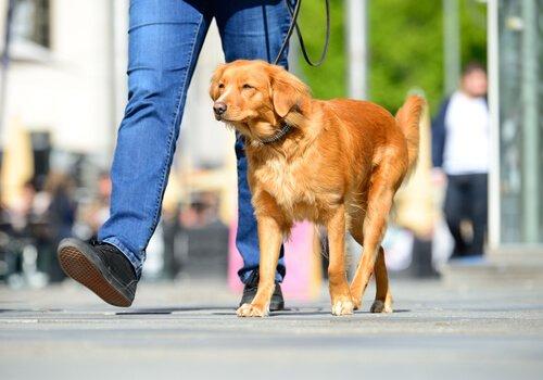 Bu Yaz Köpeğinizin Patilerinin Yanmasını Engelleyin