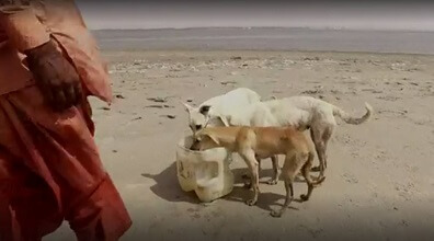 Kalbinizi Isıtacak Bir Hikaye: Köpekler Adasının Bakıcısı