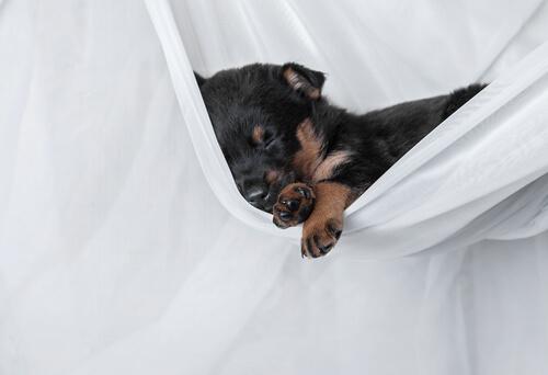 Köpekler Neden Bütün Gün Uyur?