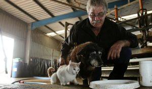yaşlı köpek ve kedi