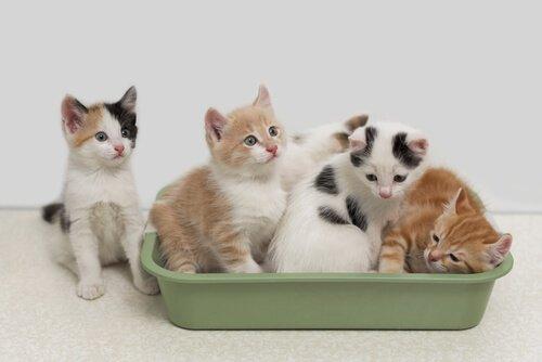 kap içerisinde yavru kediler