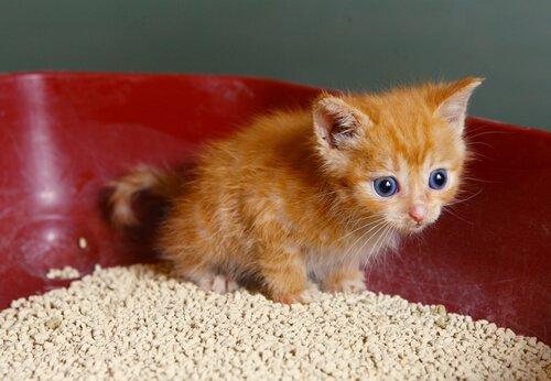Kedi Kumu Kabının Kokusunu Gideren 7 Yöntem