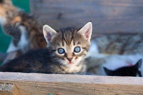 Bir Kedi Sahiplenmeniz Gerektiğine Dair Dokuz Sebep