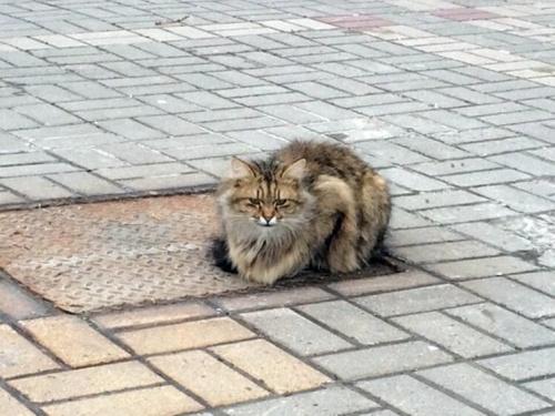 Terk Edilen Kedi Bir Sene Sahibini Bekledi