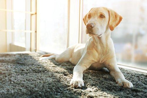 Kısırlaştırılmış Köpeklerde Davranış Değişiklikleri